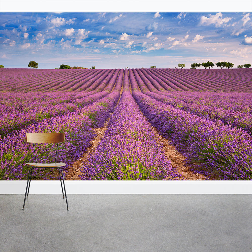French lavender field wall mural blooming french lavender wall mural amipublicfo Image collections