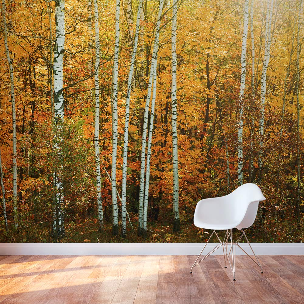 autumn birch tree forest wall mural ForAutumn Tree Mural