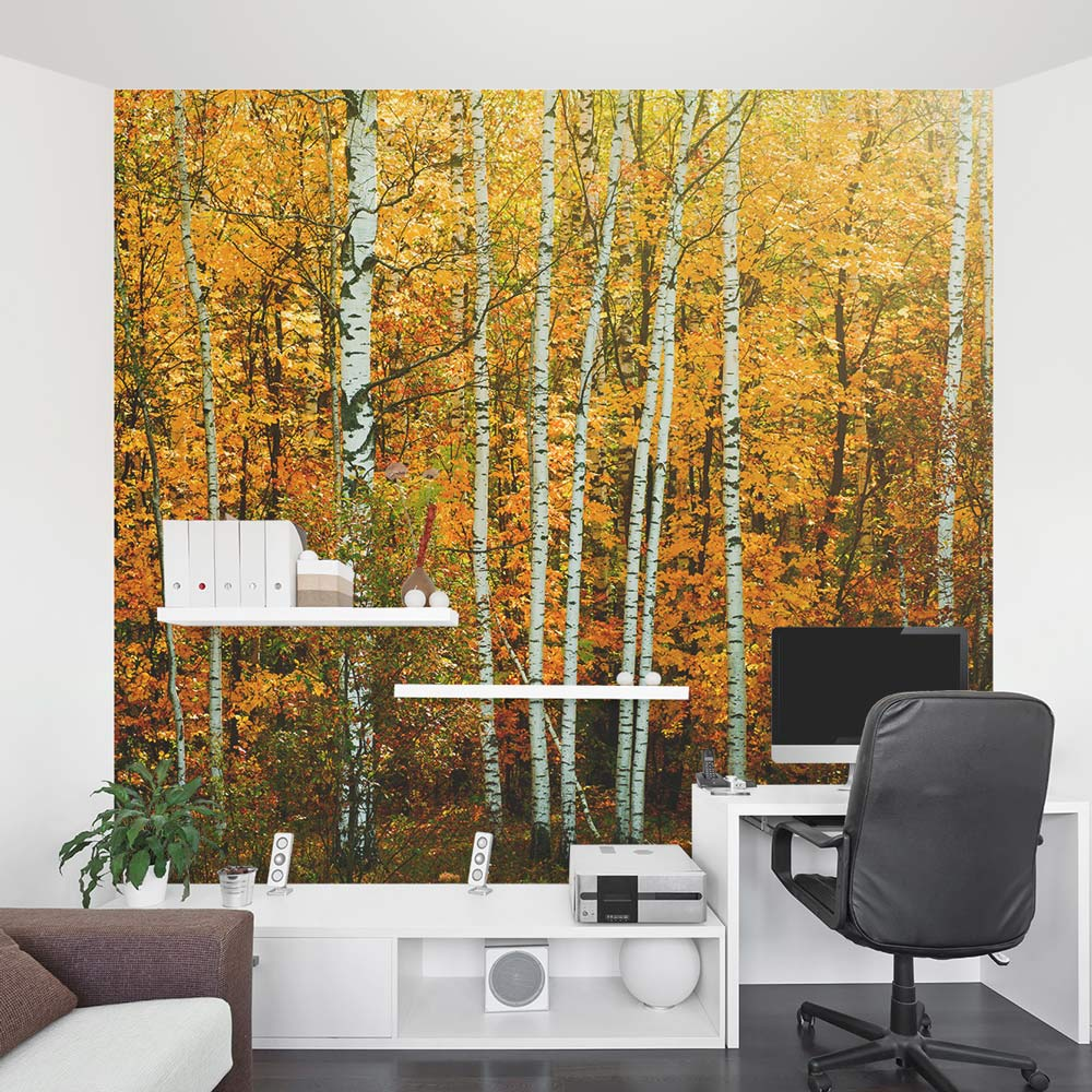 28 autumn birch tree forest wall autumn birch tree for Birch tree forest wall mural