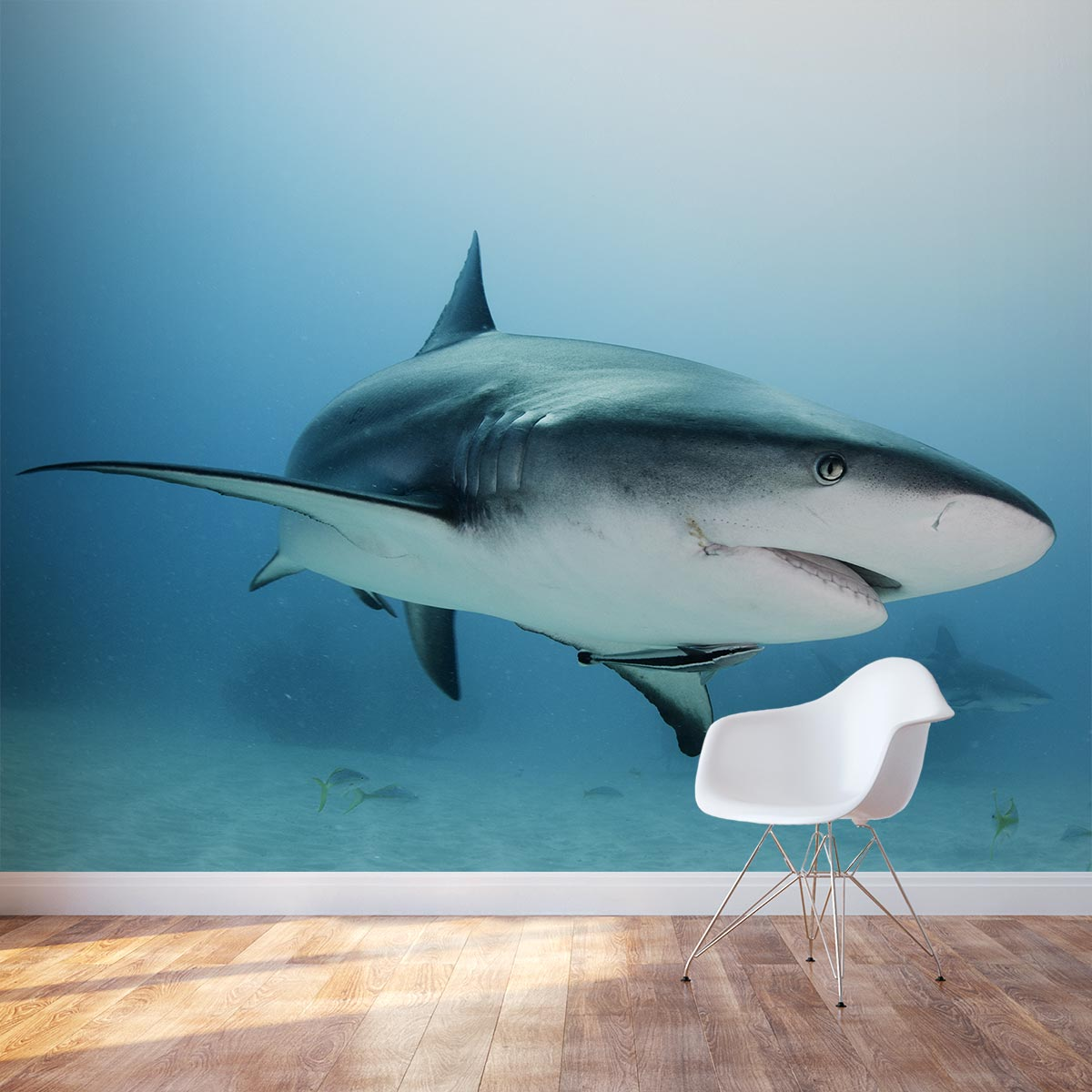 caribbean reef shark wall mural animal wall murals for the home