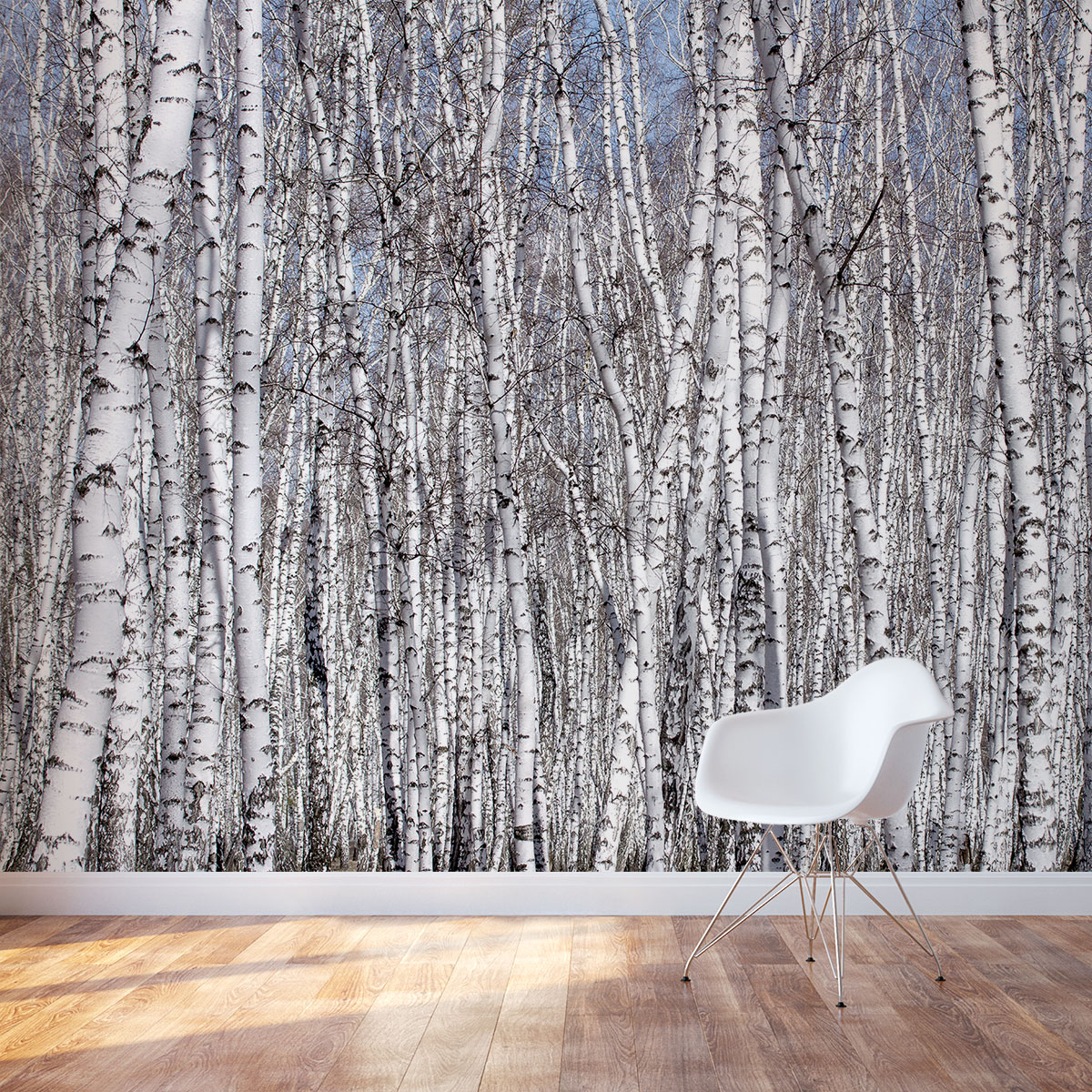 autumn birch forest wall mural1 birch tree wall mural how to paint a tree mural off the wall