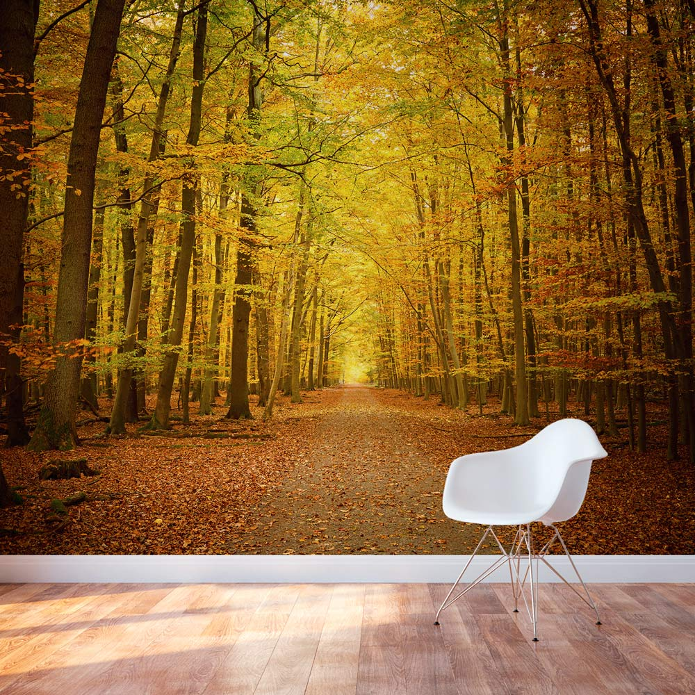 Autumn forest path wall mural Wall pictures