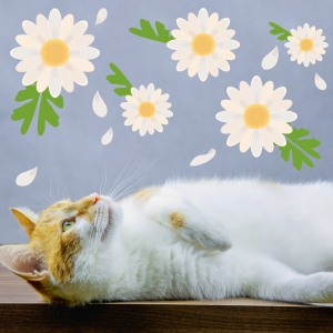Floating Daisies Wall Decal