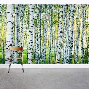 Dense Birch Tree Forest Wall Mural