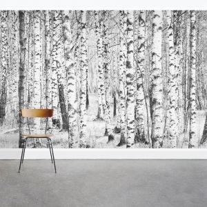 Winter Birch Trees Wall Mural