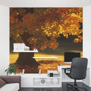 Sunset Tree Wall Mural