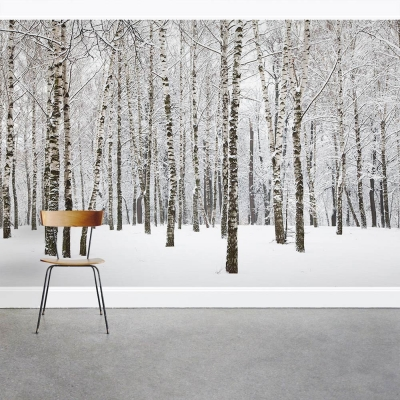 Winter Birch Tree Forest Wall Mural