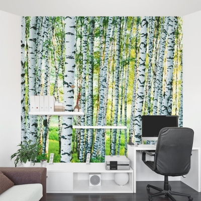 Dense Birch Tree Forest Wall Mural