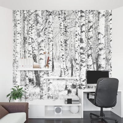 Winter Birch Trees Wall Mural