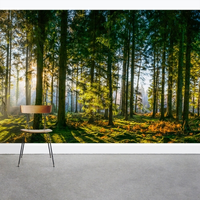 Forest Grove Wall Mural