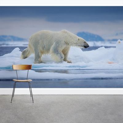 Wet Polar Bear Wall Mural