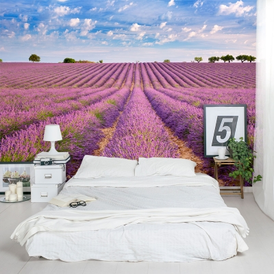 French Lavender Field Wall Mural