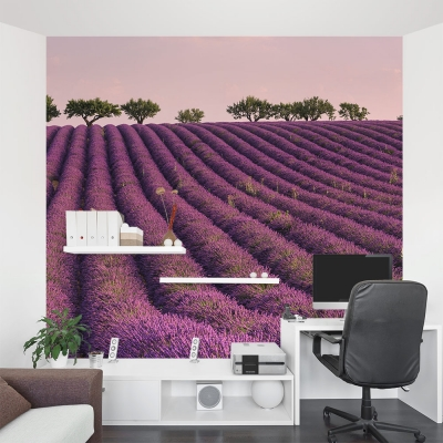 Dawn in a French Lavender Field Wall Mural