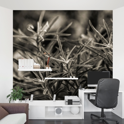 Rosemary Plant Wall Mural
