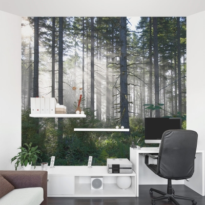 Eerie Forest Wall Mural