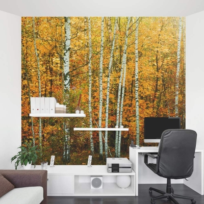 Fall Birch Tree wall mural