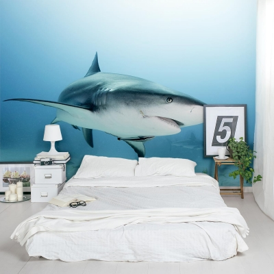 Caribbean Reef Shark Wall Mural