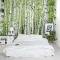 Summer Birch Forest Wall Mural