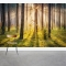 Sunset Woodland Wall Mural