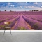 Blooming French Lavender Wall Mural